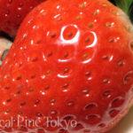 いちごの日 1月15日 NPO法人ローカル・パイン・トーキョー 果物 農作物