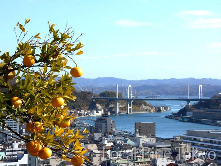 広島県 NPO法人ローカル・パイン・トーキョー