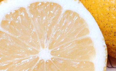 NPO法人ローカル・パイン・トーキョー レモン 檸檬 れもん マルシェ 東京