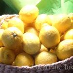 NPO法人ローカル・パイン・トーキョー 広島県産 レモン 自然農法