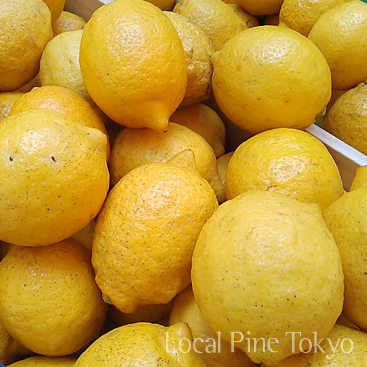 NPO法人ローカル・パイン・トーキョー レモン 黒点病