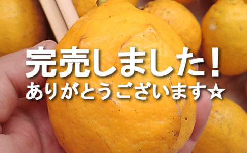 NPO法人ローカル・パイン・トーキョー マルシェ 広島県 美味しい レモン 自然農法 完売