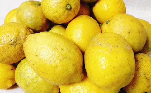 NPO法人ローカル・パイン・トーキョー マルシェ 広島県 美味しい レモン 自然農法